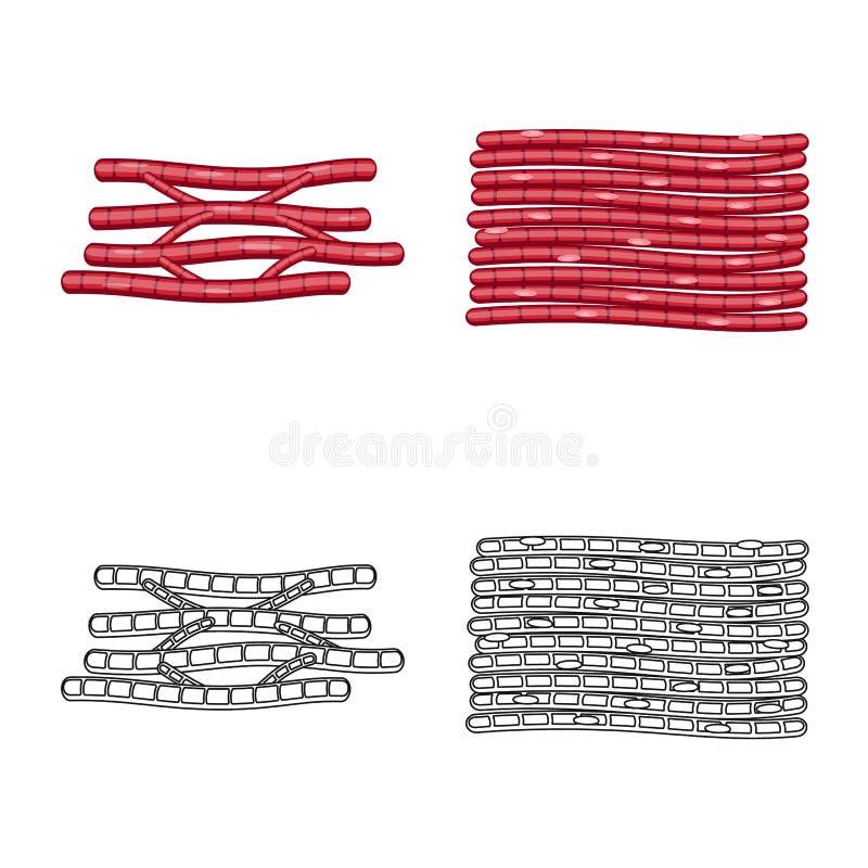 Progettazione di vettore di fibra e del simbolo muscolare Raccolta dell'illustrazione di vettore delle azione del corpo e della f illustrazione vettoriale