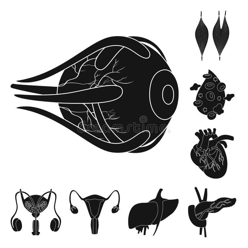 Progettazione di vettore di ricerca e del simbolo del laboratorio Metta dell'icona di vettore dell'organo e della ricerca per le  illustrazione di stock