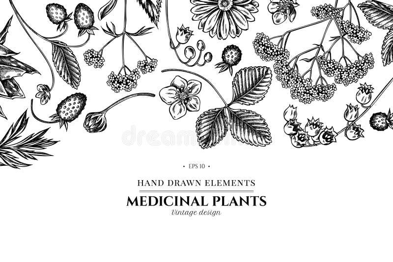 Progettazione floreale con aloe in bianco e nero, calendula, mughetto, ortica, fragola, valeriana royalty illustrazione gratis