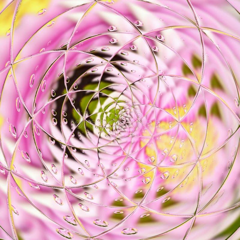 Progettazione floreale dell'offerta della carta dei lilys con effetto di pioggia in giallo ed in rosa per la carta, aletta di fil illustrazione vettoriale