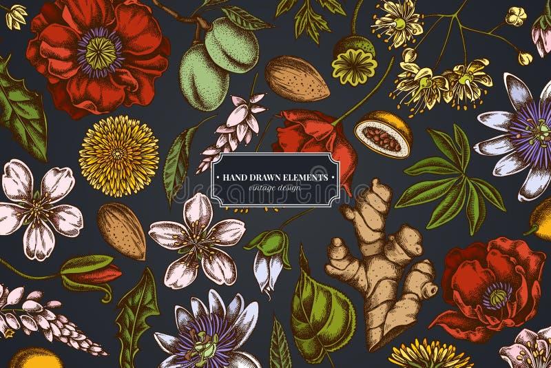 Progettazione floreale su fondo scuro con la mandorla, dente di leone, zenzero, fiore del papavero, fiore di passione, tilia cord illustrazione di stock