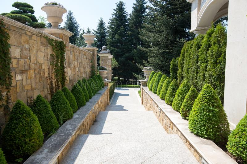Alberi e cespugli verdi in giardino disegno del giardino for Cespugli giardino