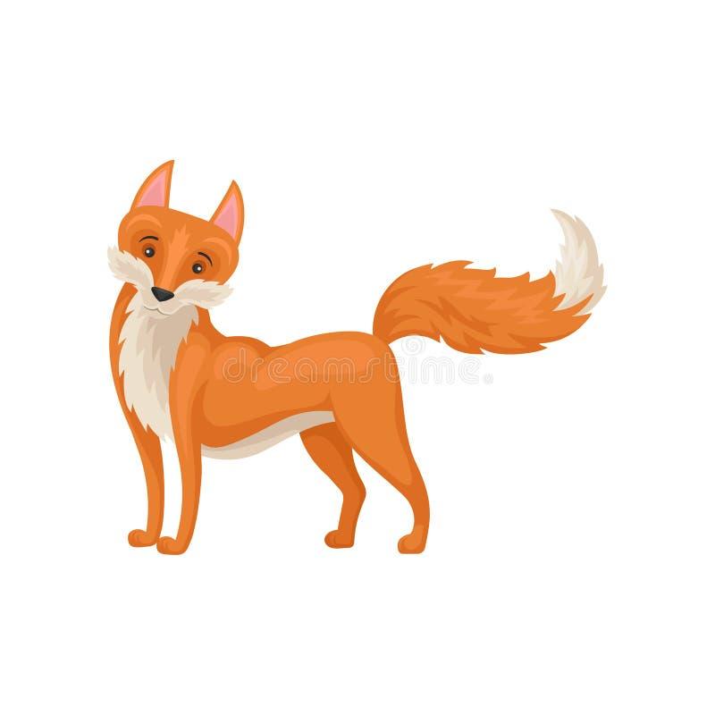 Progettazione piana di vettore di stare volpe rossa adorabile con la coda alzata Creatura selvaggia animale della foresta illustrazione di stock