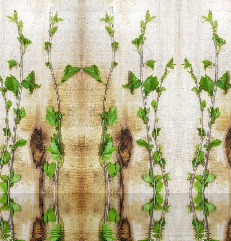 Progettazione semplice, giovani rami verdi della ciliegia, il concetto di ecologia immagini stock libere da diritti