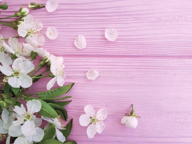 Progettazione su un fondo di legno rosa, molla di freschezza del fiore di bellezza della ciliegia fotografie stock