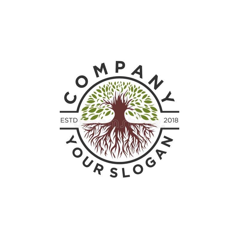 Progettazioni di logo di olivo, logo della radice royalty illustrazione gratis
