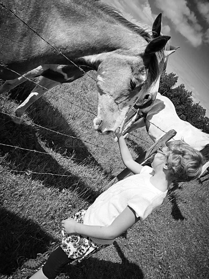 progetti la ragazza del foal dell'elemento fotografie stock