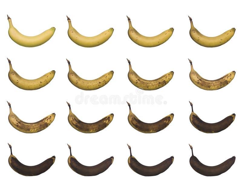 progrès de banane images libres de droits