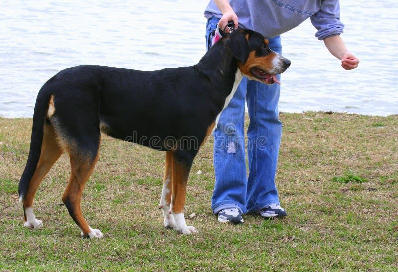 program szkolenia psa. obrazy stock