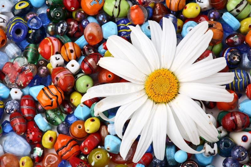 Programmes et marguerite colorés photographie stock