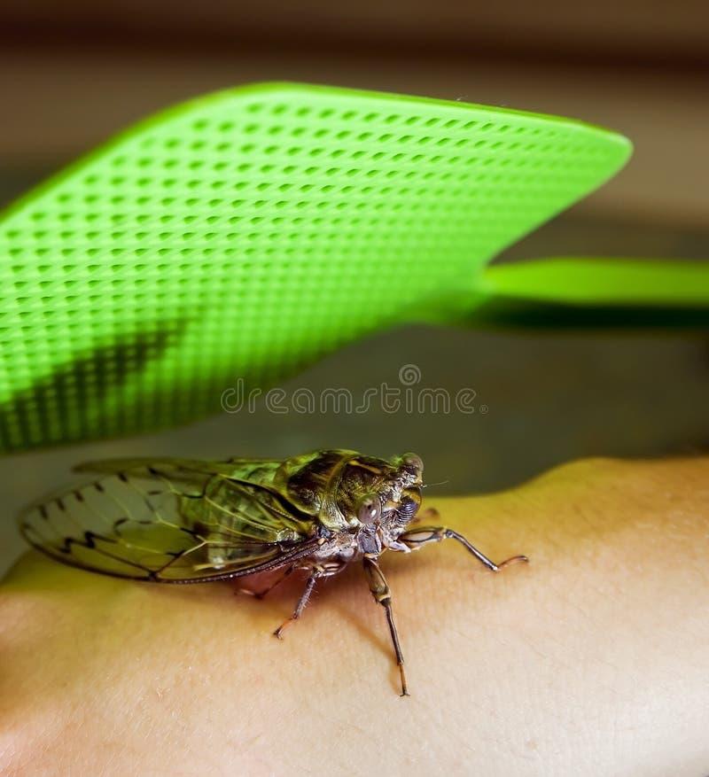 Programmfehler-Fliegenklatsche stockfoto