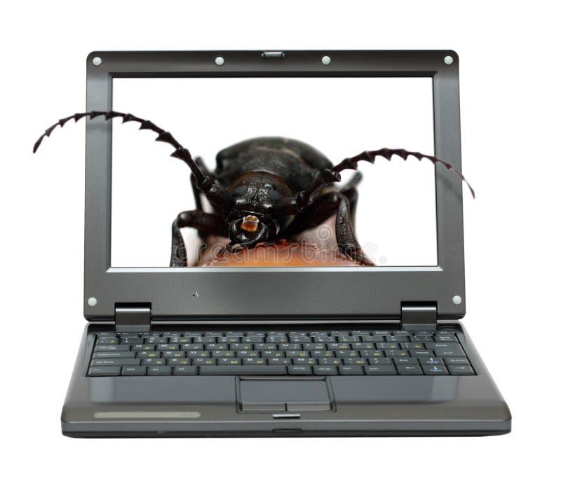Programvara För Påsebärbar Datormetafor Arkivfoton