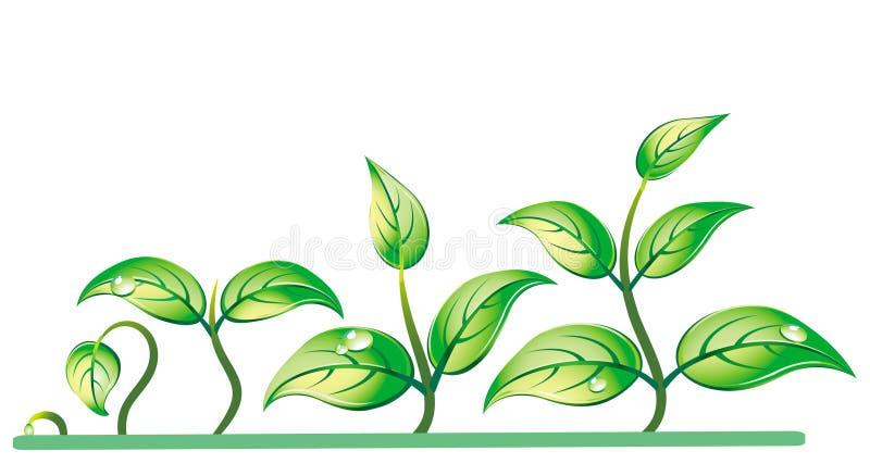 Progresión del crecimiento de la planta de semillero ilustración del vector