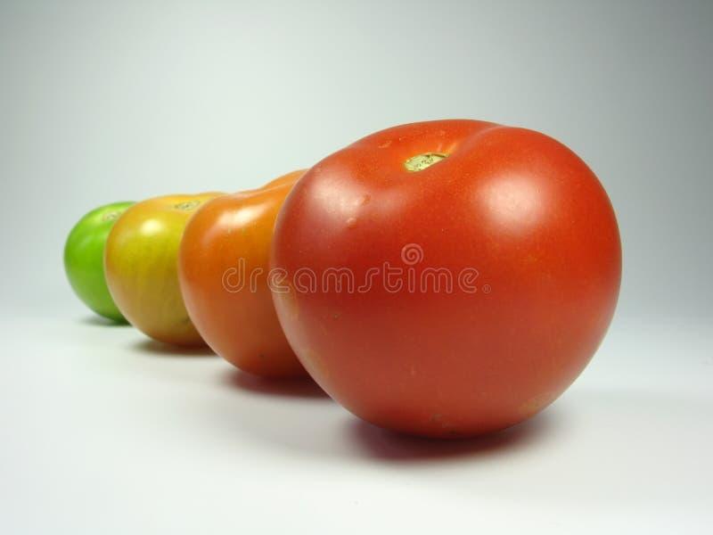 Download Progress stock photo. Image of growth, autumn, fruitfulness - 3310570
