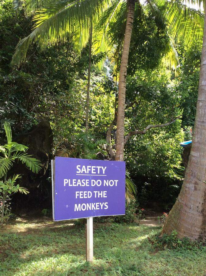 Do not feed monkeys sign in English in front of jungle background. Prohibited sign Do NOT FEED THE MONKEYS. Do not feed monkeys sign in English in front of stock image