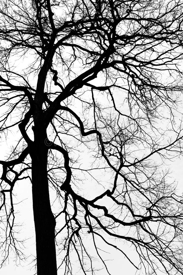 Proietti un albero immagine stock libera da diritti