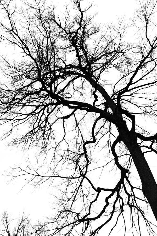Proietti un albero immagine stock