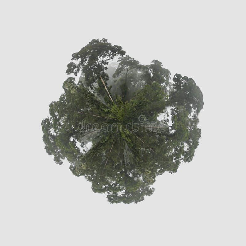 Projeção pequena do planeta do panorama estereográfico da terra verde da floresta úmida tropical de Dipterocarp fotos de stock
