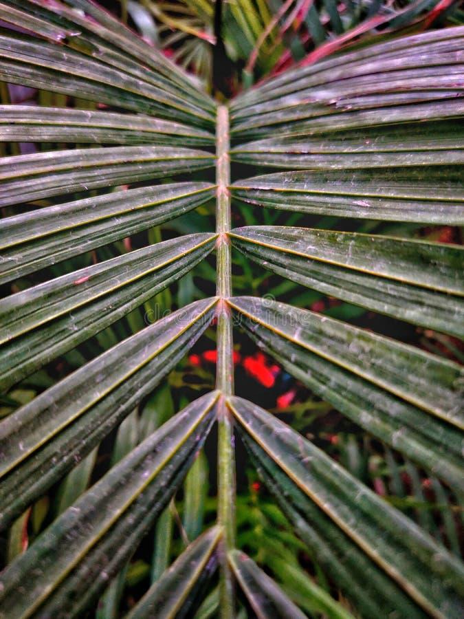 Projekt robić oddzielona zielona palma opuszcza obraz royalty free