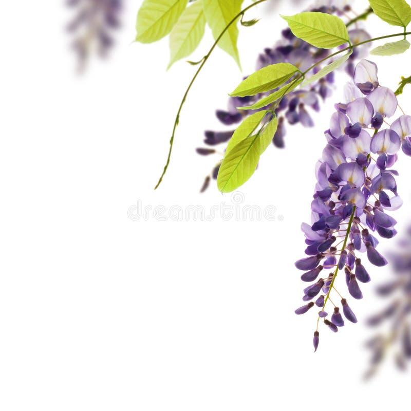 projekta elementu kwieciste kwiatów żałość zdjęcia royalty free