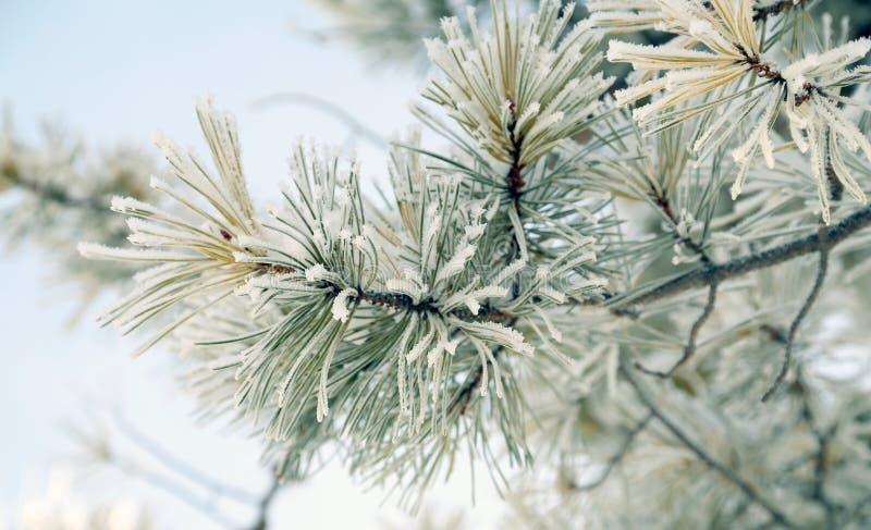 projekta wizerunku drzewa zima fotografia royalty free