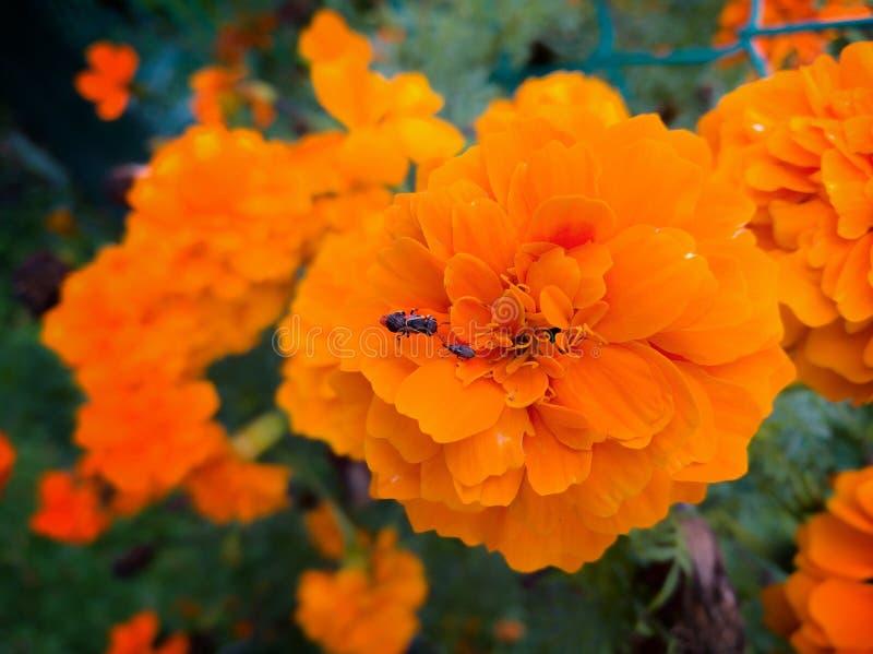 projekty kwiaty owadów elementów wektora obraz stock