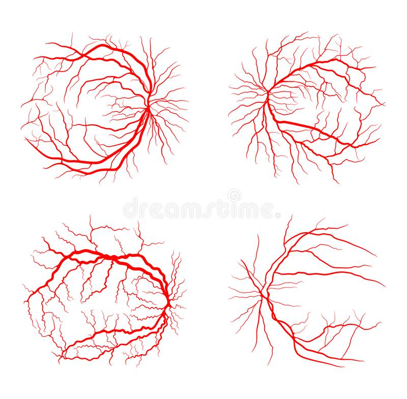 Projeto ajustado do vetor da angiografia do raio do sistema x da veia do olho isolado sobre ilustração do vetor
