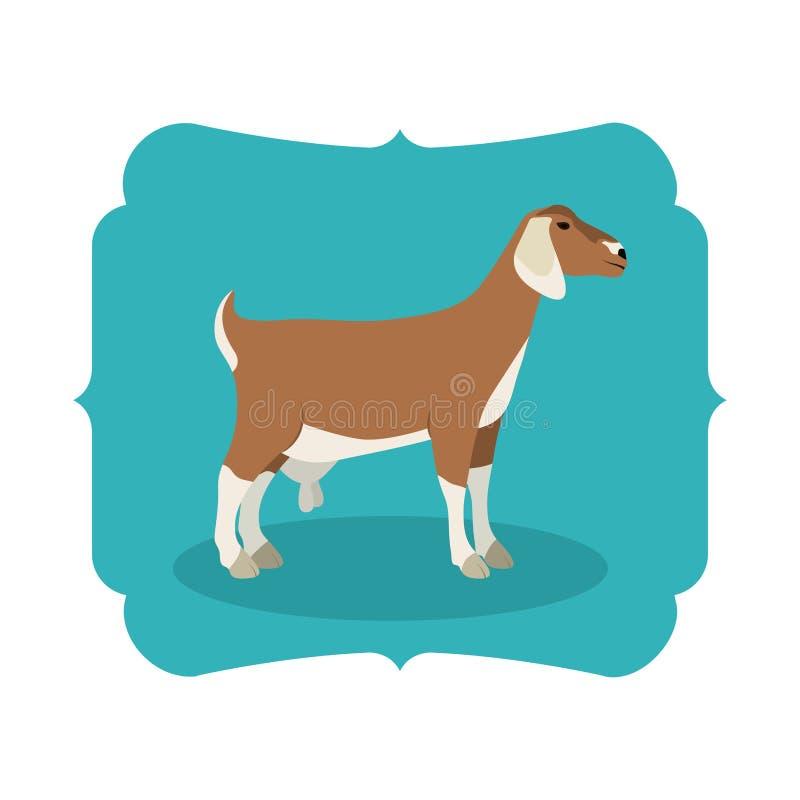 Projeto animal isolado dos rebanhos animais da cabra ilustração do vetor