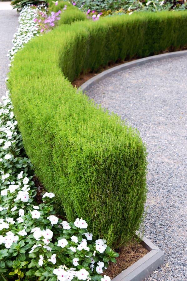 Projeto bonito da jarda Camas e conversão de florescência de flor Flores e arbustos decorativos na jarda fotos de stock royalty free