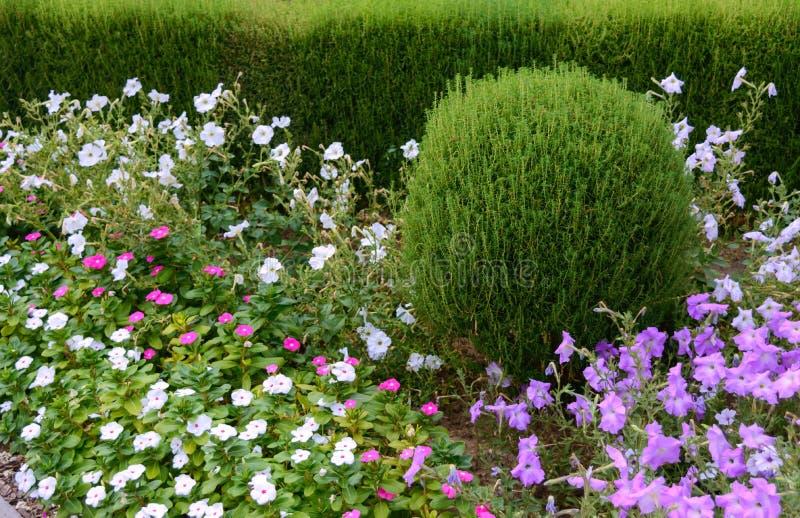 Projeto bonito da jarda Camas e conversão de florescência de flor Flores e arbustos decorativos na jarda foto de stock
