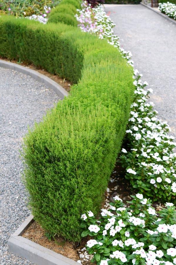 Projeto bonito da jarda Camas e conversão de florescência de flor Flores e arbustos decorativos na jarda imagem de stock royalty free