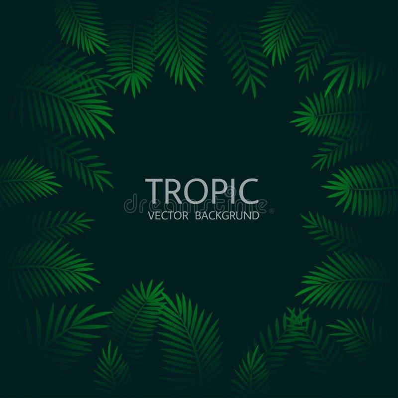 Projeto com folhas de palmeira e rotulação tropicais exóticas Vetor tr ilustração royalty free