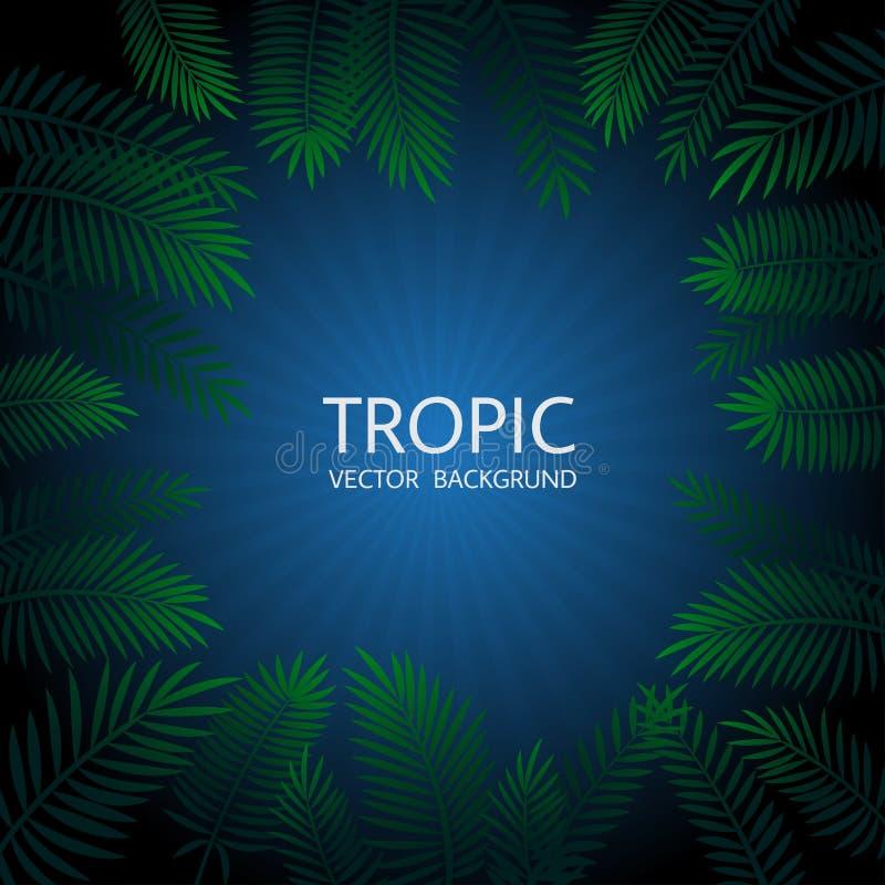 Projeto com folhas de palmeira e rotulação tropicais exóticas Vetor tr ilustração do vetor
