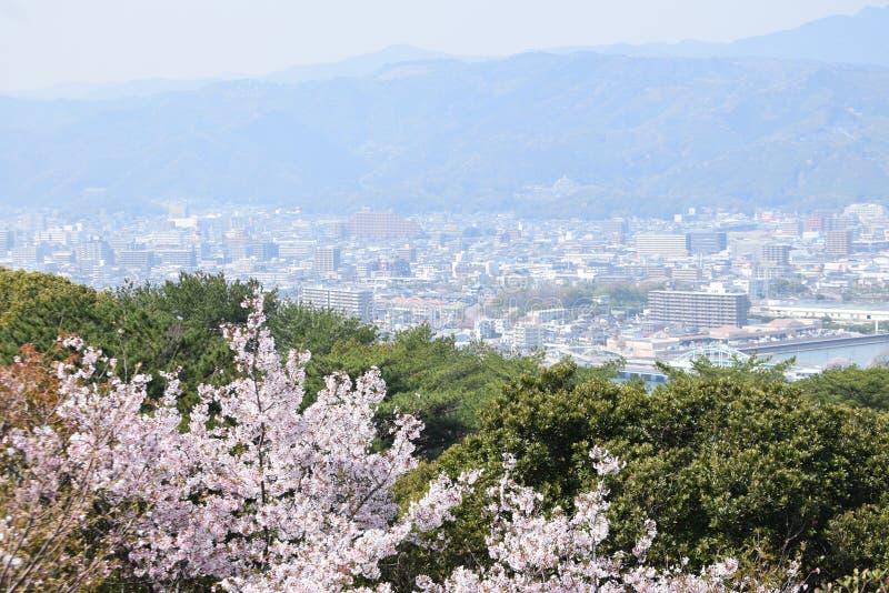 Projeto da arte de Sakura Flowers Background Flor de Sacura da mola japão fotografia de stock royalty free