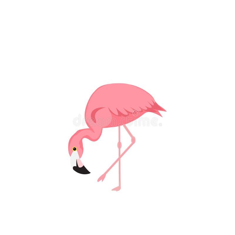 Projeto da ilustração do pássaro do flamingo no fundo Ilustração EPS10 do vetor ilustração stock