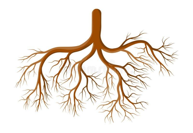 Projeto do ícone do símbolo do vetor dos desenhos animados da planta da raiz Illustr bonito imagens de stock