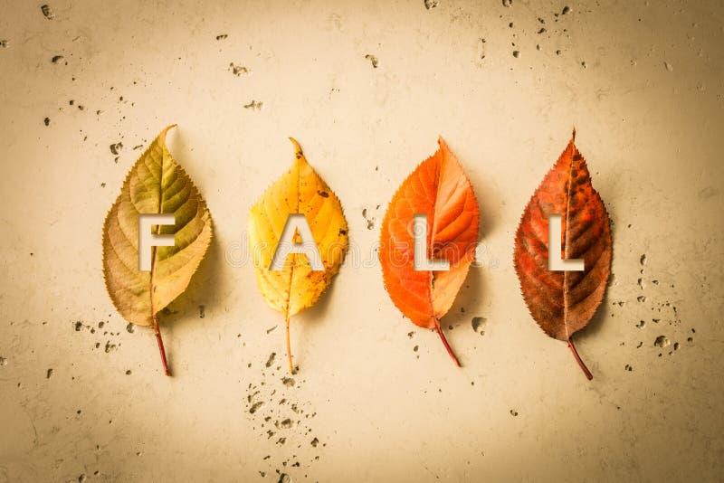 Projeto do cartaz do outono da queda com as quatro folhas coloridas imagem de stock