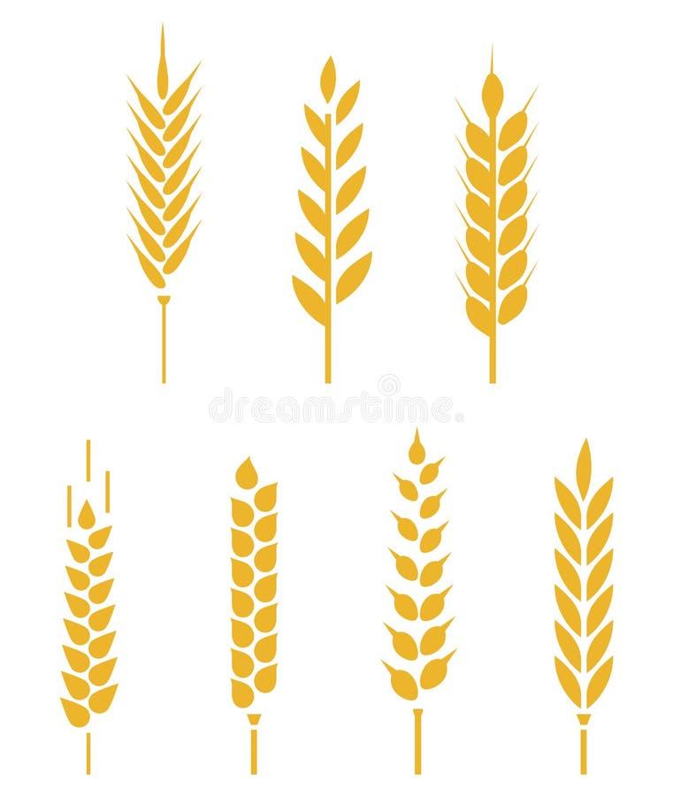 Projeto do logotipo do vetor e elementos da grão do trigo ilustração royalty free