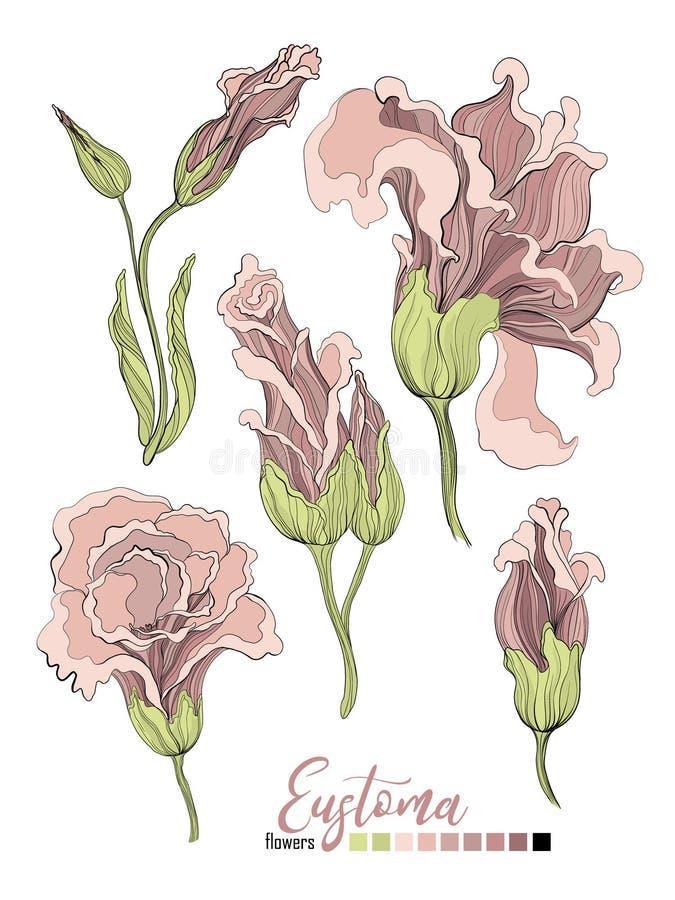 Projeto do ramalhete floral do vetor: flor pálida do Eustoma do pó cremoso da alfazema do pêssego do rosa de jardim O vetor do ca ilustração do vetor