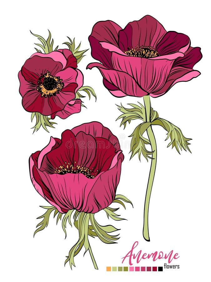 Projeto do ramalhete floral do vetor: flor vermelha de Borgonha Anemony do jardim O vetor do casamento convida o cartão ilustração do vetor