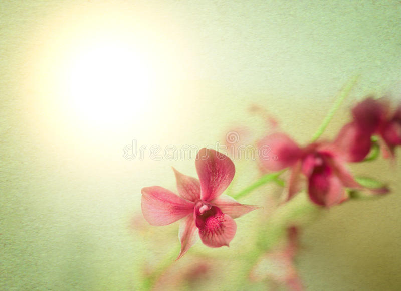 Projeto estilizado da orquídea fotografia de stock