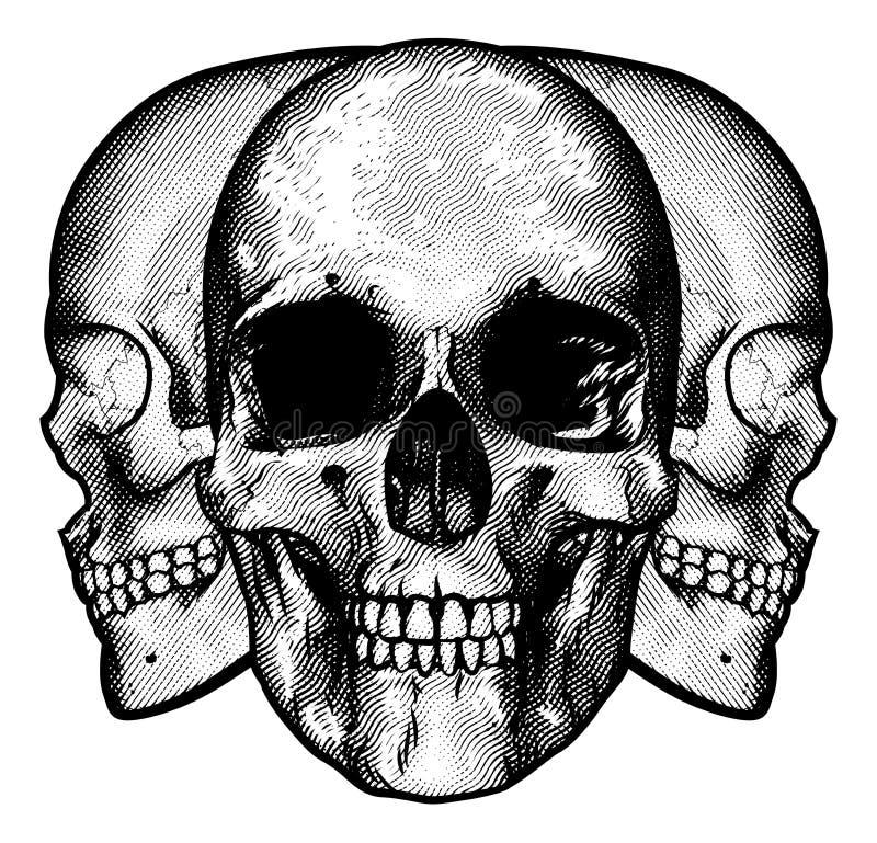 Projeto gráfico dos crânios ilustração royalty free