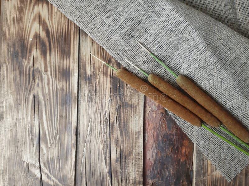 Projeto minimalista do outono com tela dos juncos, do cattail e do saco no fundo de madeira fotos de stock royalty free