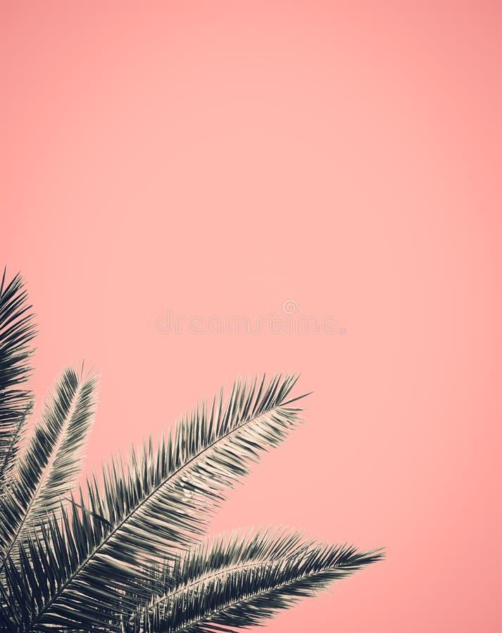 Projeto retro da palmeira do estilo imagens de stock