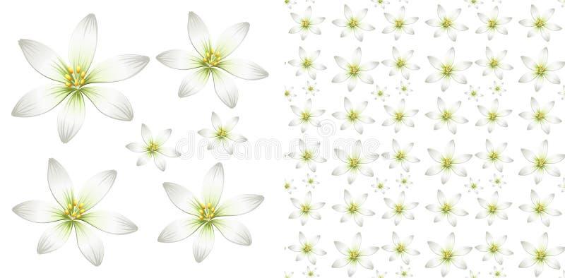Projeto sem emenda do fundo com flor branca ilustração royalty free