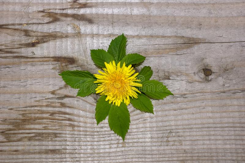 Projeto simples, framboesa amarela da flor do dente-de-leão, o conceito da ecologia imagem de stock royalty free