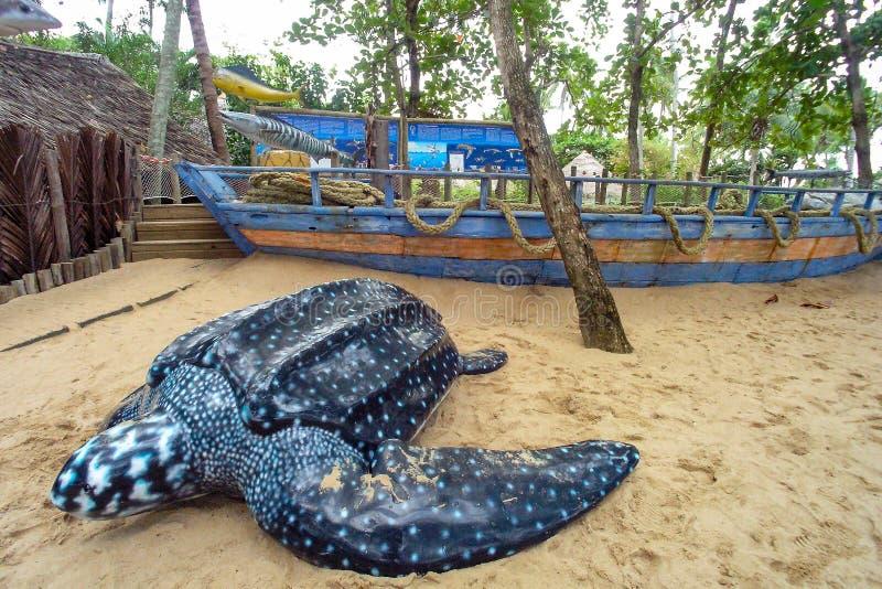Projeto Tamar przy Praia robi forte, Brazylia obrazy royalty free