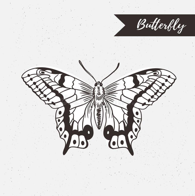 Projeto tirado mão do logotipo da borboleta Elemento do vetor no fundo do grunge ilustração royalty free
