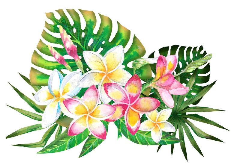 Projeto tropical do verão da aquarela para a bandeira ou o inseto com folhas de palmeira exóticas, flores do Plumeria fotos de stock