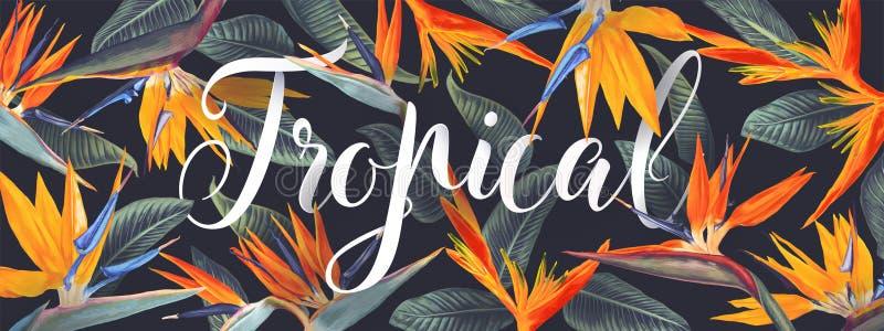 Projeto tropical do vetor do verão para a bandeira ou o inseto com Strelitzia Reginae ilustração do vetor